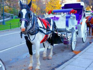 ニューヨーク セントラルパーク 周遊馬車