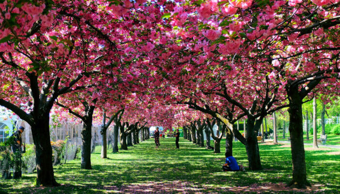 ニューヨーク 気候 - 春