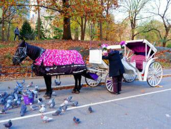 ニューヨーク・セントラルパーク ガイド付き馬車