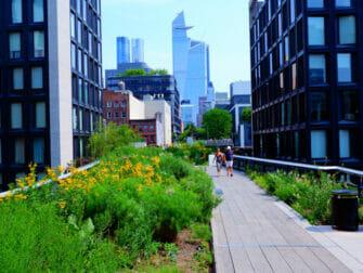 ニューヨーク 公園 - 夏のハイラインパーク