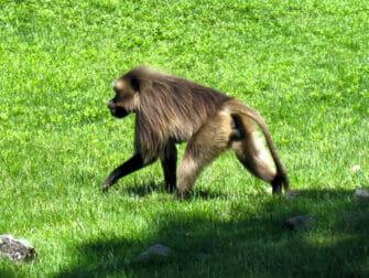 NYC ブロンクス動物園のサル