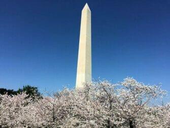 ワシントンDC バスツアー ワシントン記念塔