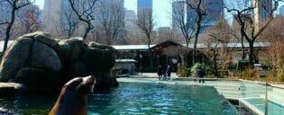 セントラルパーク 動物園 チケット