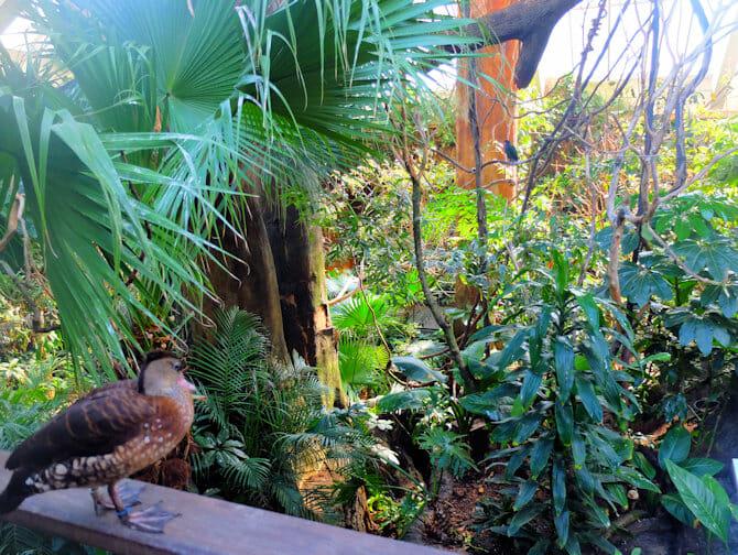 セントラルパーク 動物園 チケット - 熱帯雨林