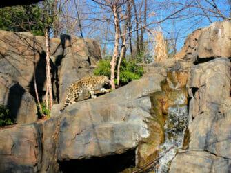 セントラルパーク 動物園 チケット - ユキヒョウ