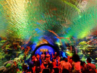 ニューヨーク 水族館 - サンゴ礁